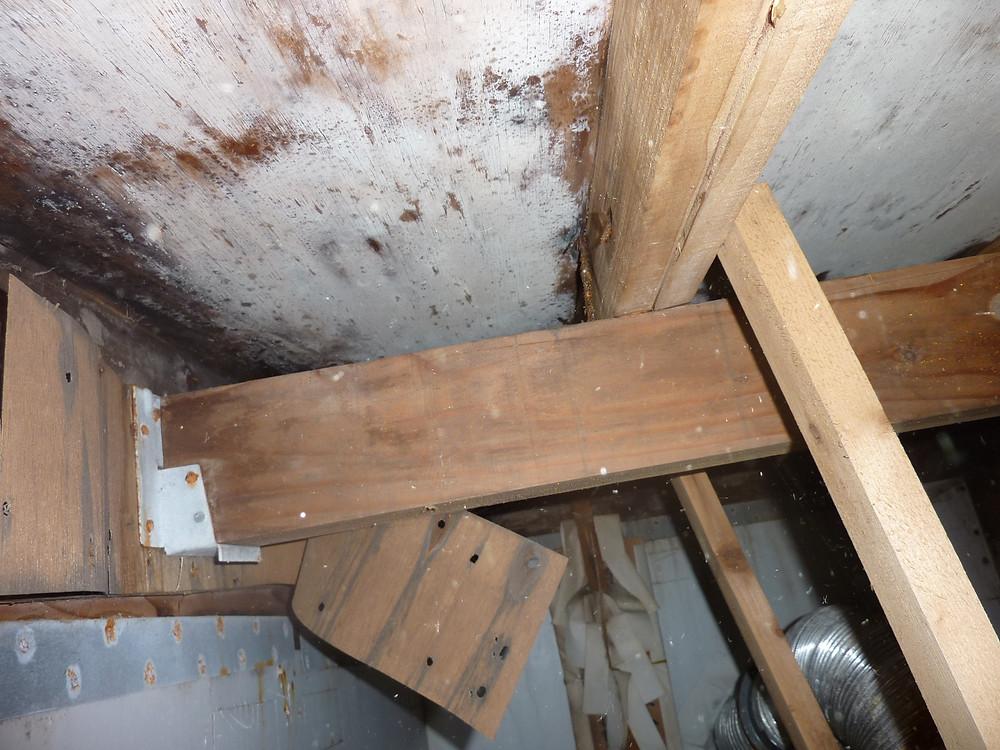 住宅検査―小屋裏