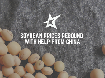 Soybean Prices Rebound with Help From China