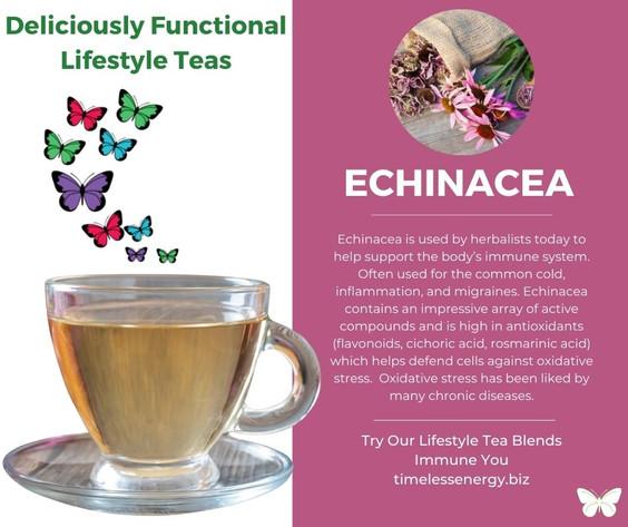 Echinacea Root.jpg