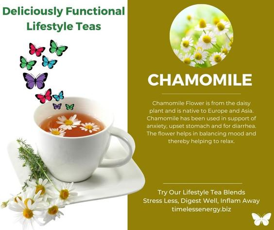 Chamomile Flower.jpg