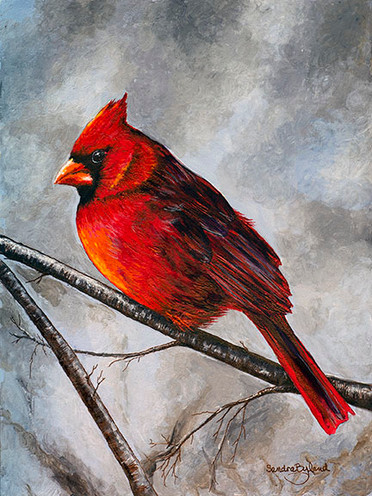 A Winter's Day - Red Cardinal