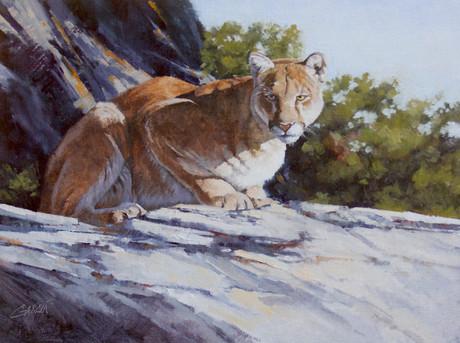 Canyon Visitor