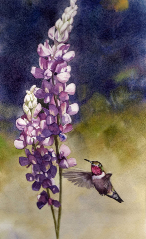 Anna's Hummingbird and Lupine