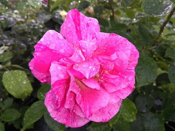 roza 2019.21.jpg