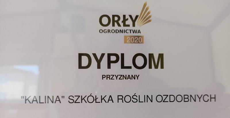 orly3.jpg