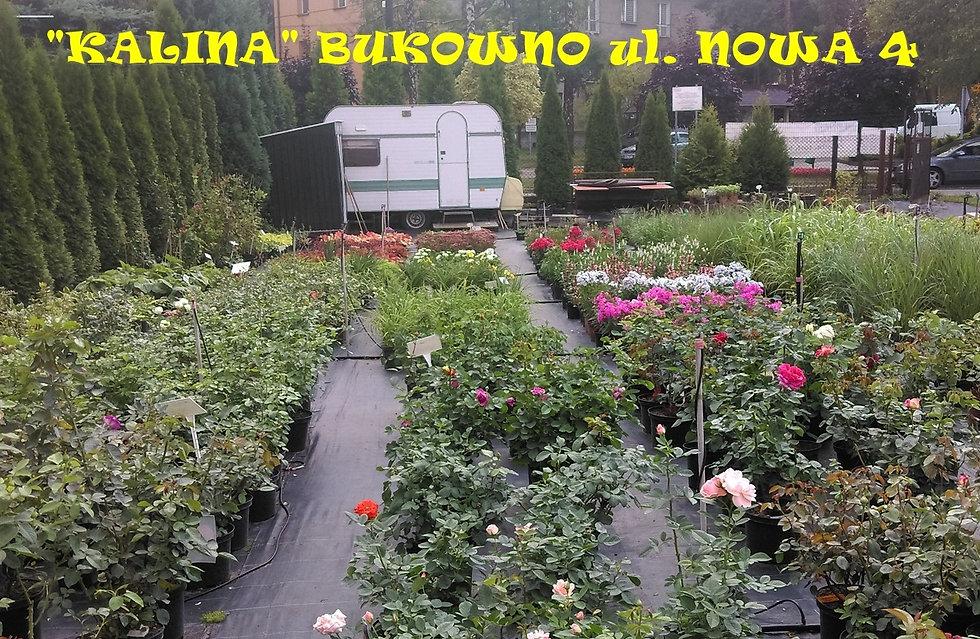 bukowno1_edited.jpg