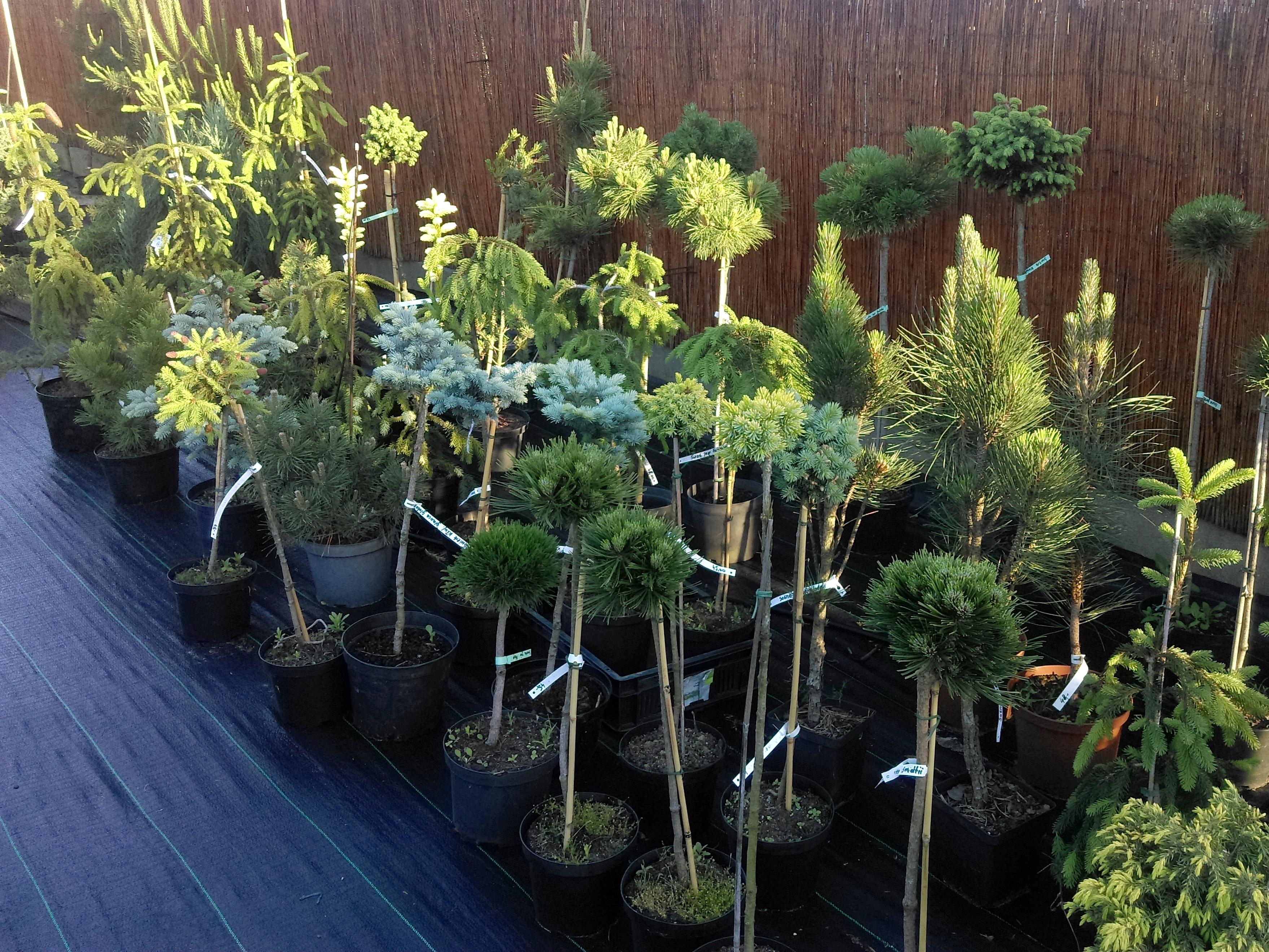 drzewa14.jpg