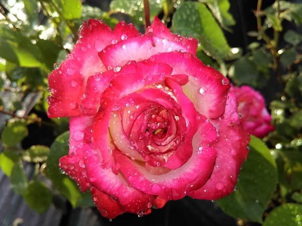 roza 2019.22.jpg