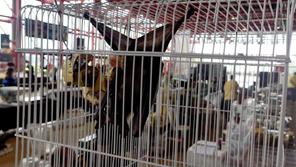 Terminemos con los mercados de animales exóticos vivos
