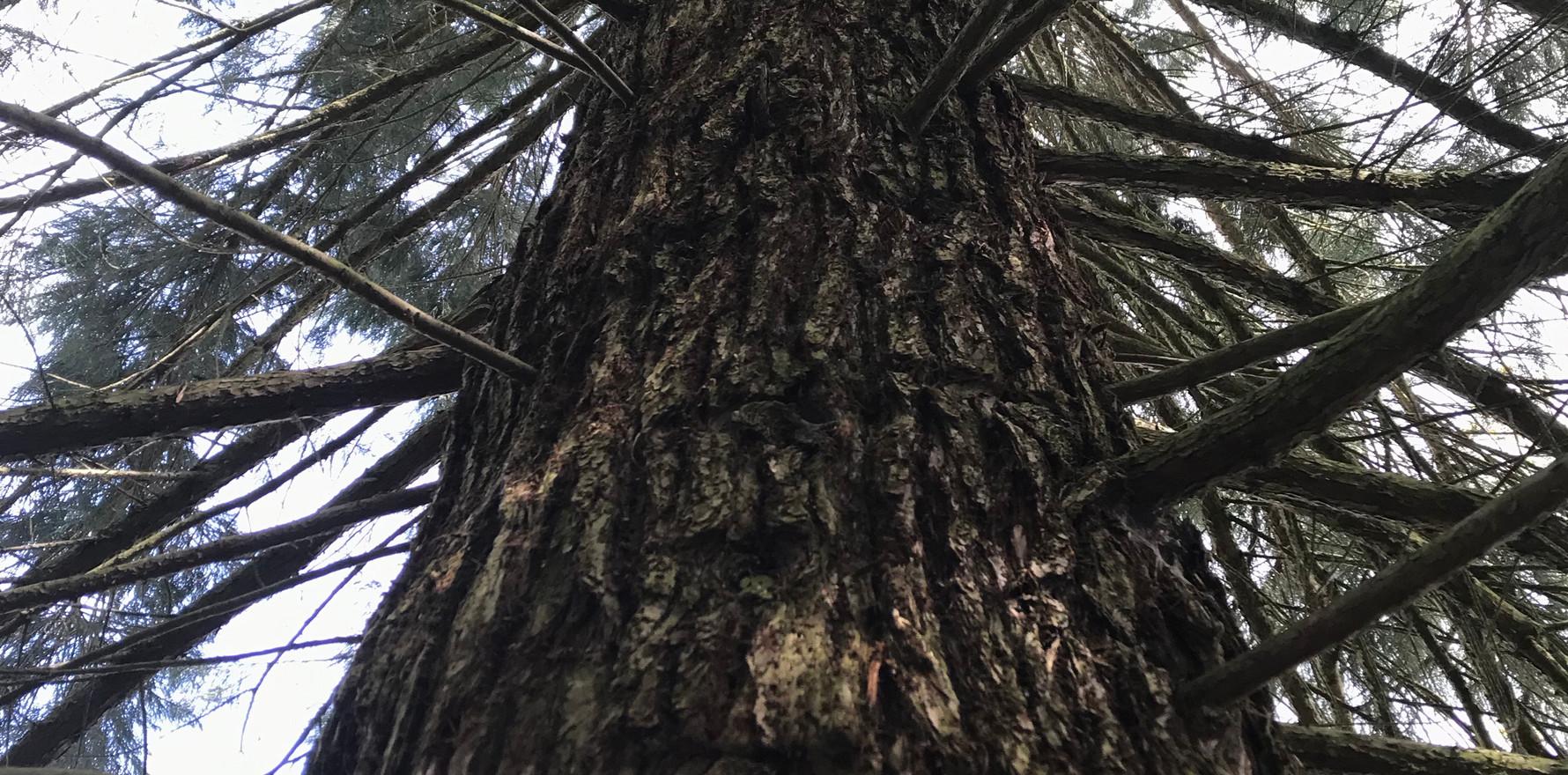 Können Bäume sprechen?
