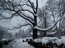 IMG_9457*snowtreePointBreeze.JPG