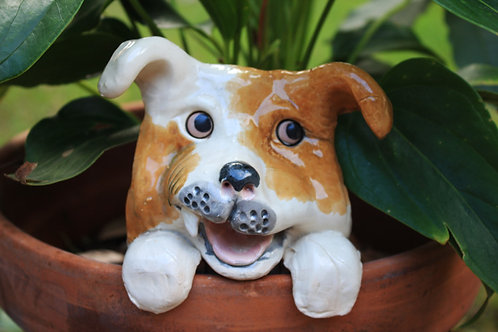 Tan and White Dog Pot Watcher