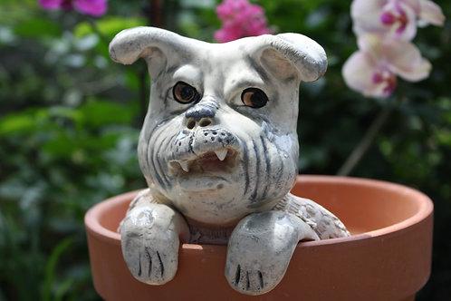 Pot Watcher - Angry Dog