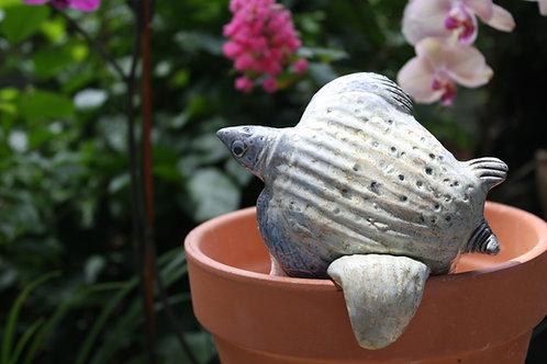 Pot Watcher Turtle