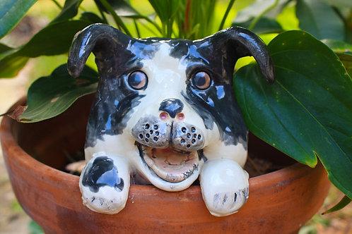 Black Dog Flower Pot Watcher