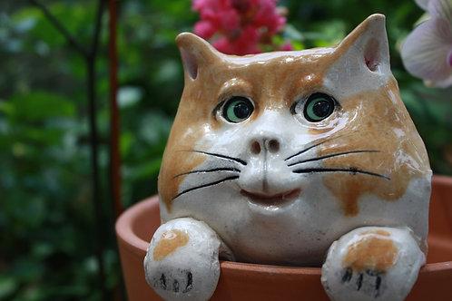 Pot Watcher Cat - Baker's Dozen (+1 for FREE)