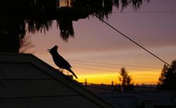 Vancouver Dawn