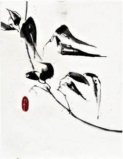 Seedpods 2