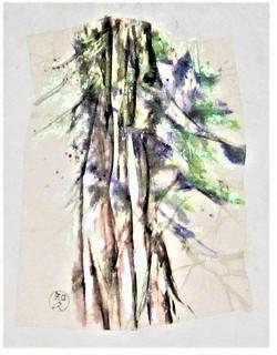 Sekishu pines