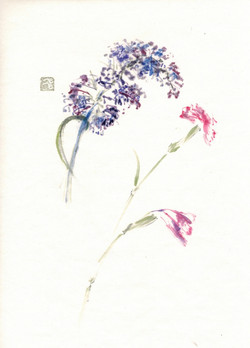 Lilac and Carnation