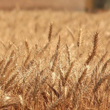 Shedding light on the environmental impact of food