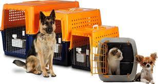 pet moving company