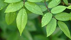 Growing Green.jpg