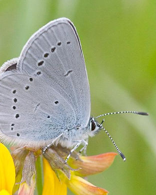 small blue butterfly.jpeg
