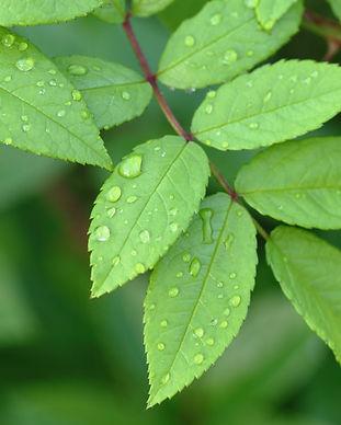Growing Green 2.jpg