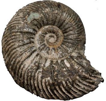 ammonite_edited_edited.jpg