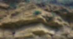 Taynton Limestone