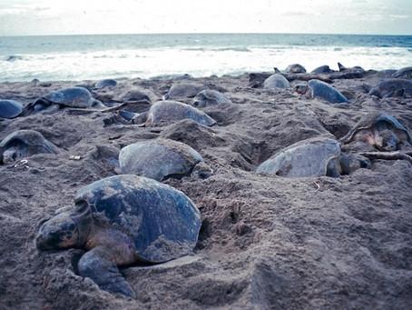 La Escobilla: el santuario de miles de tortugas marinas
