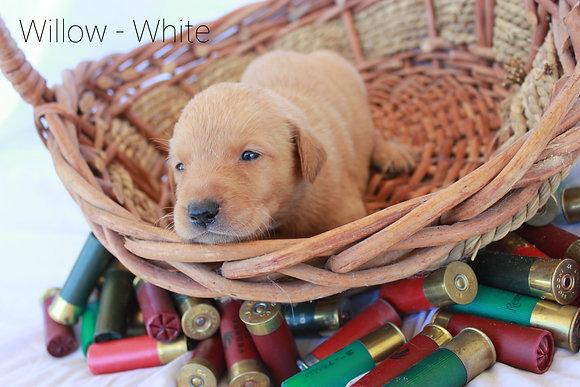 Willow - White