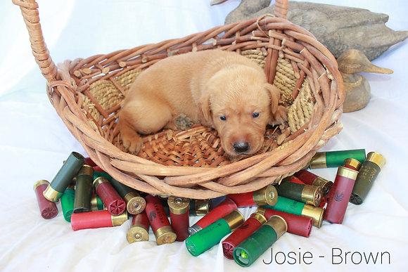 Josie - Brown