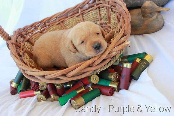 Candy - Purple/ Yellow