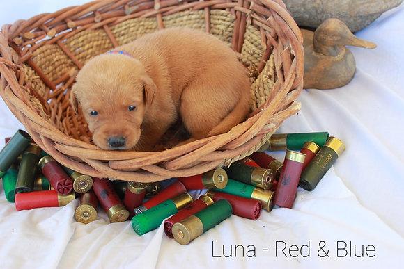 Luna - Blue/Red