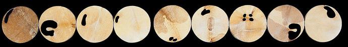 İsimsiz, 2007 Şasiye gerilmiş parşömen Poliptik Her biri Ø 41 cm