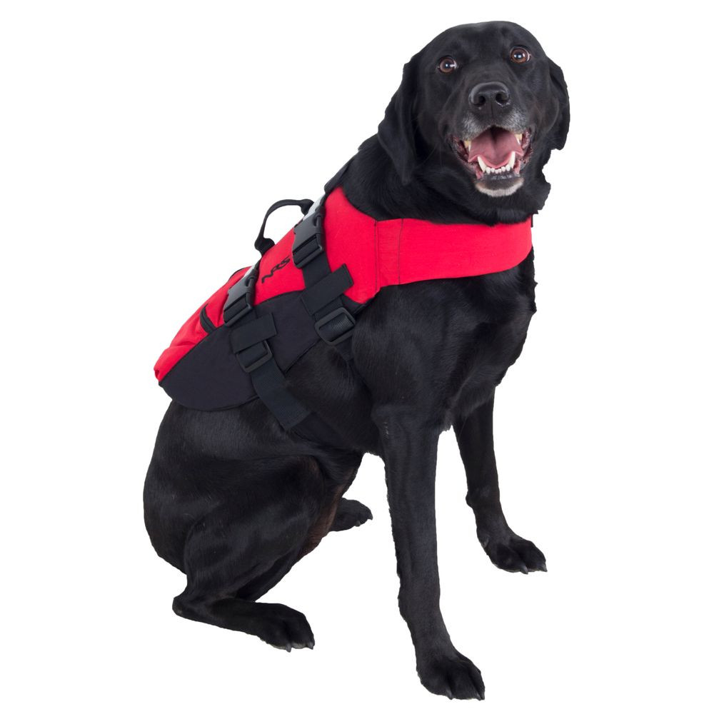 Black Lab wearing a NRS life jacket
