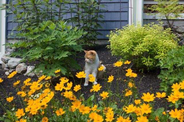 Tiz in Garden