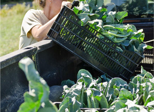 Maine Food to Portland Tables: Building a Healthy and Sustainable Food System for Portland