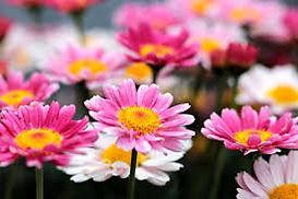 flower multi.jpg