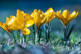 flower spring.jpg
