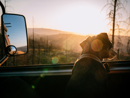 10 Tips for Enjoying Van Life with Pets
