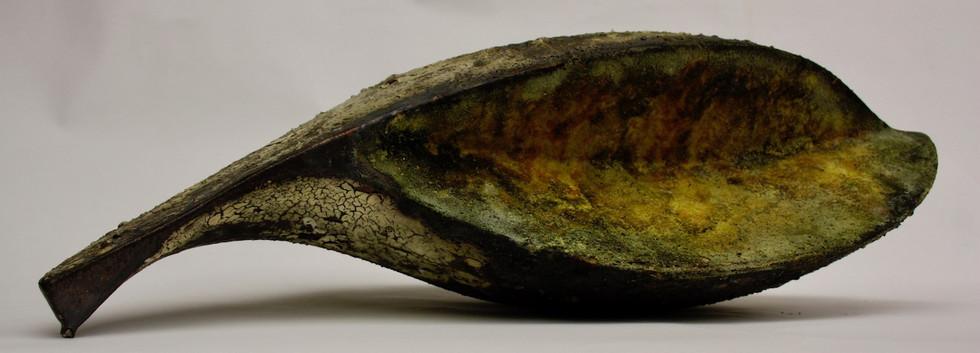 Caloplaca III.jpg