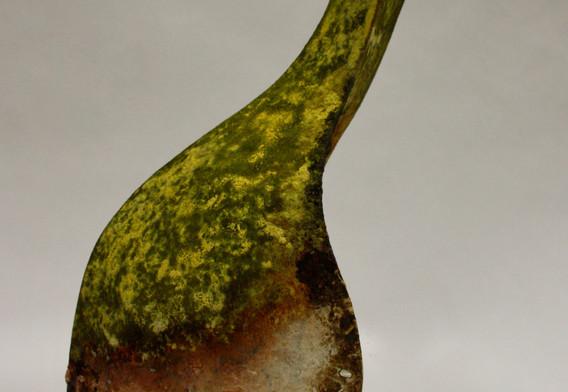 Caloplaca  IX.jpg