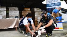 Alcaldía de Pasaje ejecuto la desparacitación con la unidad de bienestar animal.