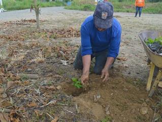 Alcalde César Encalada promueve siembra árboles guayacán en sector el Arbolito.
