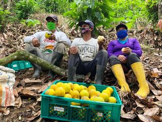 En Uzhcurrumi se produce naranja de calidad
