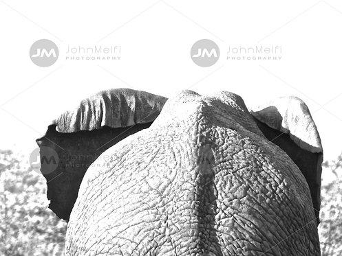 Elephant Walking Away