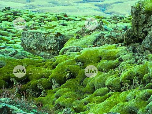 Green Wonderland